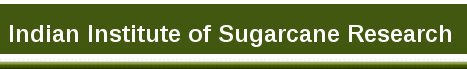 Walk-in-interview 2017 for Young Professional-II at Indian Institute of Sugarcane Research (IISR), Lucknow