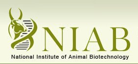 National Institute of Animal Biotechnology (NIAB) July 2017 Job  for Research Associate, Project Fellow